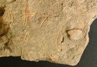 13376 Jesusen bizitza kalbarioa
